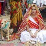 ازدواج دختر ۱۸ ساله هندی با سگ ولگرد